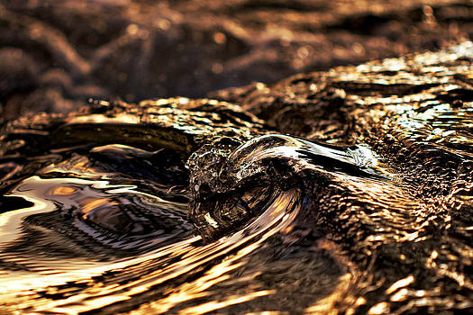 Liquid Gold by Jay Evers