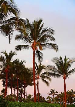 Lite Palms by Jim Moore