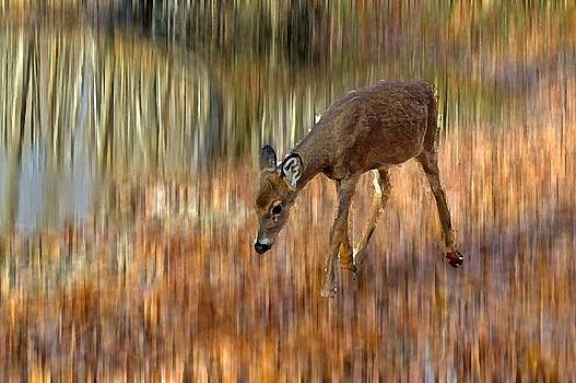 Little Bambi by Cheryl Cencich
