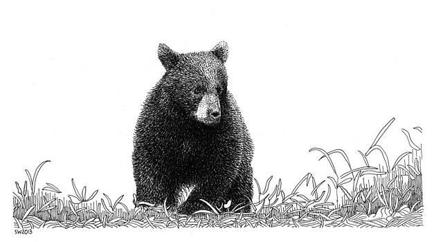 Little Bear by Scott Woyak