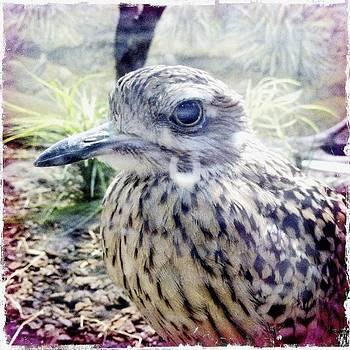 Little Bird by Bradley R Youngberg