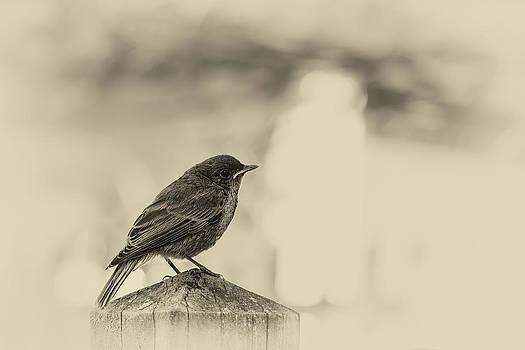 Little Bird by Christoph Schneider