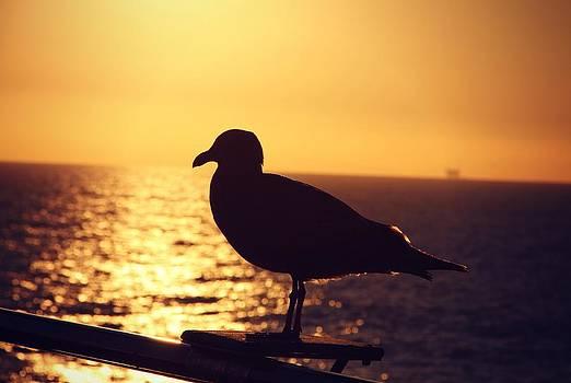 Little Bird by Emily Fidler