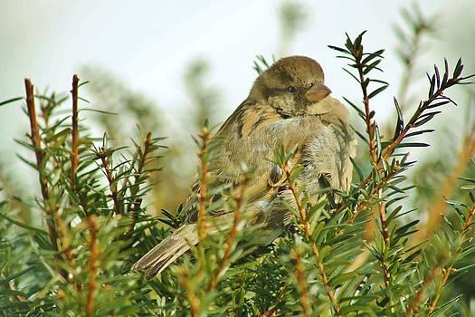 Little Bird by Tami Rounsaville