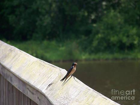 Little Birdie by Kevin Croitz