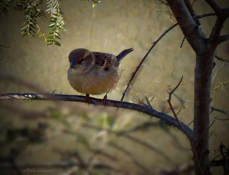 Little Birdie by Mikki Cucuzzo