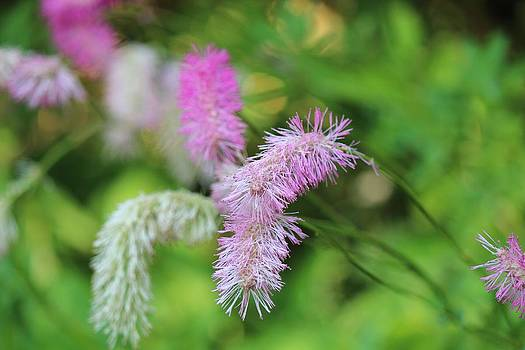 Little bit of pink by Bailey Mowser