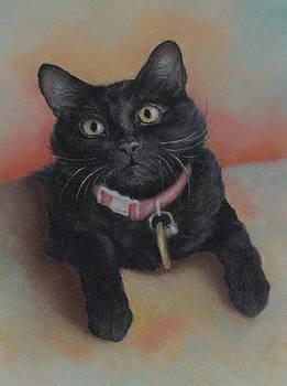 Little Black Kitty by Pamela Humbargar