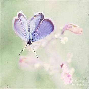 Little Blue by Pam  Holdsworth