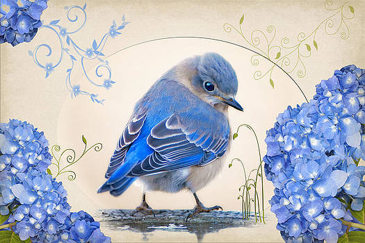 Little Bluebird in Hydrangea Garden by Bonnie Barry