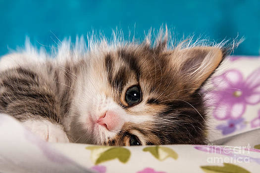 Little Cat Kitten by Doreen Zorn