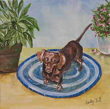 Little Dachshund Puppy by Carolyn Bell