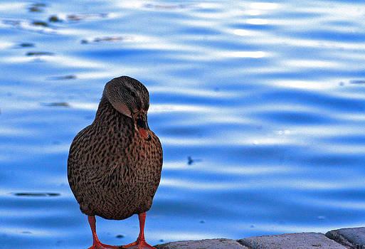 Little Duck by Benny Kennedy
