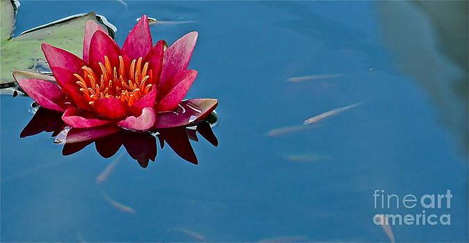 Little Fish by Jason Layden