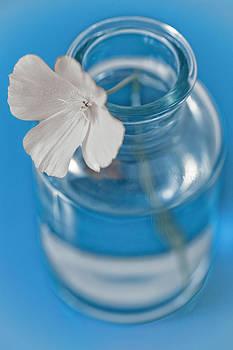 Frank Tschakert - Little Flower In A Vase