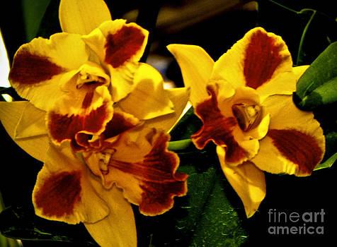 Little Flowers by Fred L Gardner