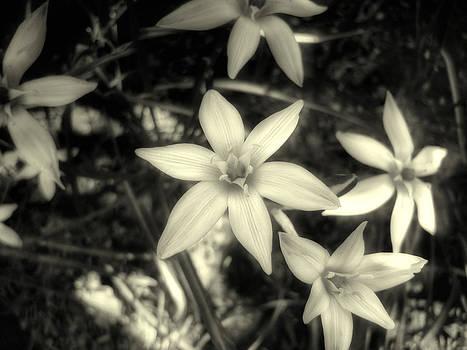 Little Flowers by Neven Spirkoski