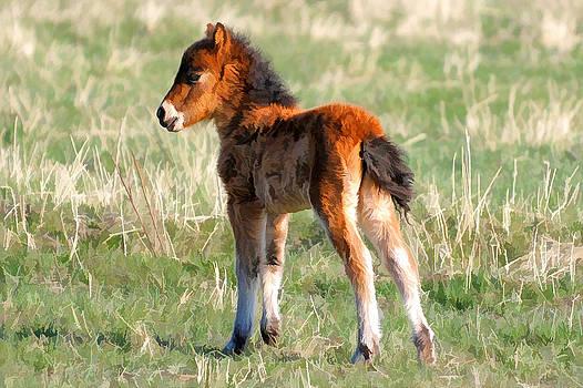 Little Foal by Liz Mackney