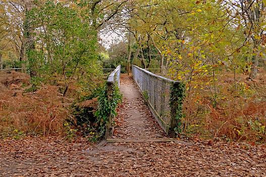 Bishopston Fine Art - Those Autumn Leaves