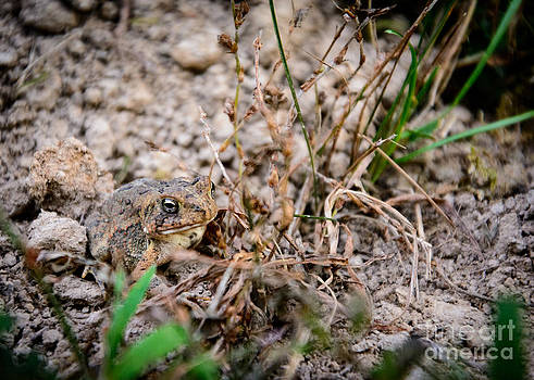 Little Frog by Mary Licanin