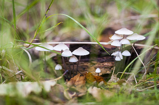 Little fungi by David Isaacson