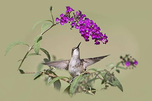Little Garden Angel by Bonnie Barry