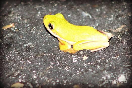 Little Green Frog by Megan Wilson