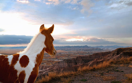 Little Horse in a Big World by Ron  McGinnis