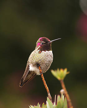 Little Hummingbird by Bob and Jan Shriner