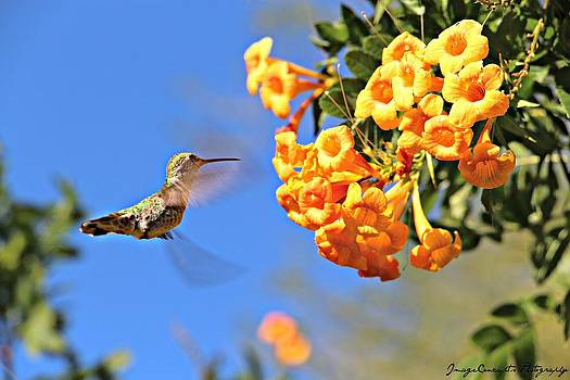 Little Hummingbird by Emily Fidler