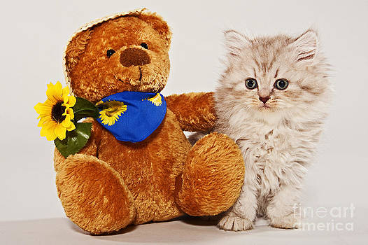 little Kitten with her Teddybear by Doreen Zorn