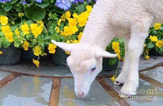 Little Lamb by Kathleen Struckle