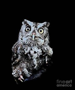 Wayne Nielsen - Little Owl Gray with Yellow Eyes Big