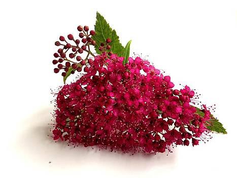 Little pink flowers by Garima Srivastava