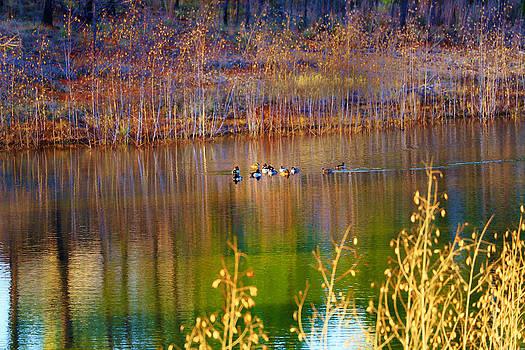 Little pond by Nelin Reisman
