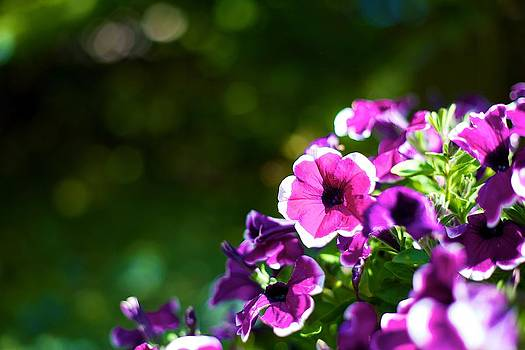 Little Purple Flowers by JM Photography