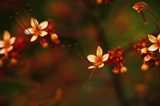 Little Red Flowers by Bradley R Youngberg