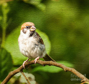 Little Sparrow by Lisa Cockrell