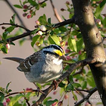 Little Sparrow by Nava Thompson