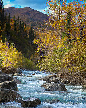 Little Susitna River by Chris Heitstuman