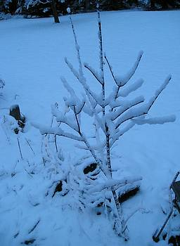 Little Tree Standing Over Face in the Snow by Liz Lare
