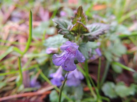 Anastasia Konn - Little Violet Flower