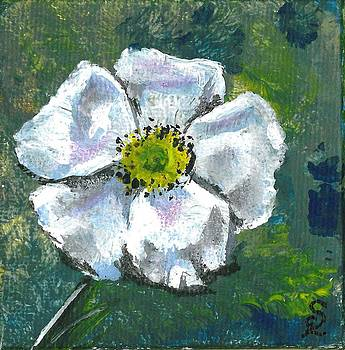 Little White Flower by Sarah Lowe
