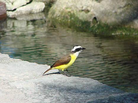 Little Yellow Bird by Michael Kovacs