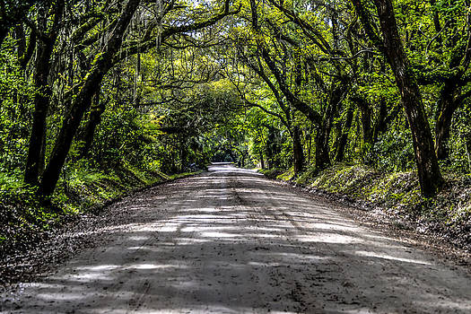 Live Oak Archway by Everett Leigh