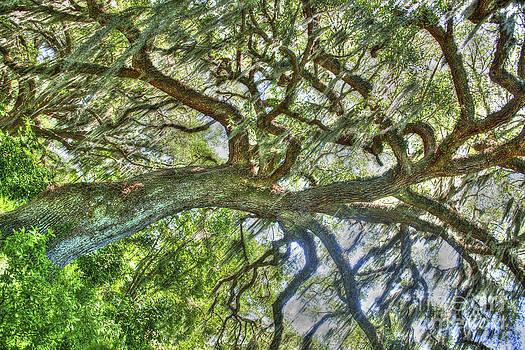 Dale Powell - Live Oak Tree Dance
