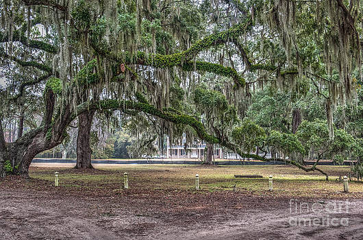 Dale Powell - Live Oak Tree Dripping with Spanish Moss