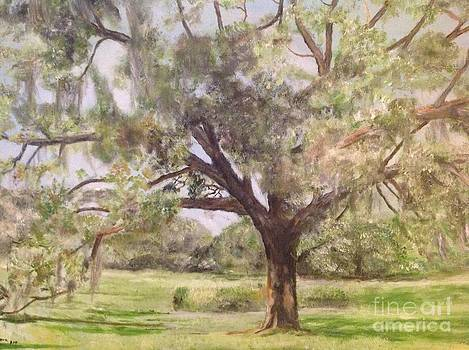 Live oak tree  in Florida   by Linea App