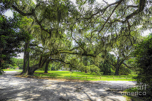 Dale Powell - Live Oaks Dripping with Spanish Moss