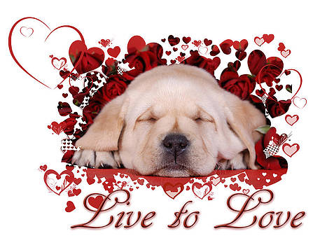 Waldek Dabrowski - Live to love